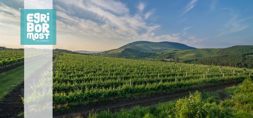 Egri Bor Most - Egri borvidék